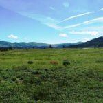 Starlight Meadow Ranch