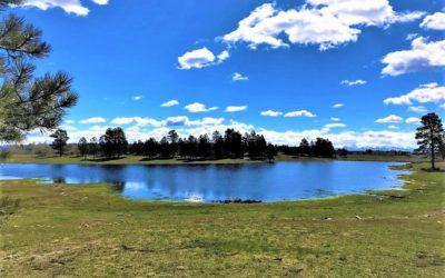 Salter Y Ranch