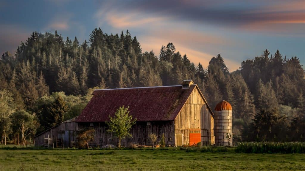 Wooden-barn-house-in-the-forest