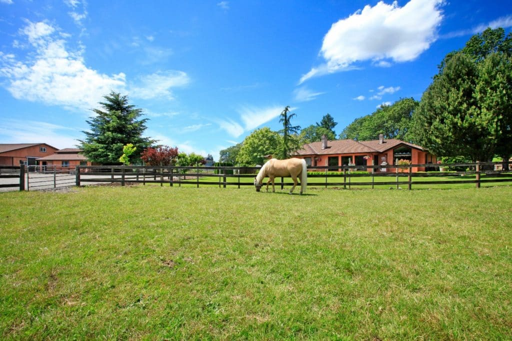 horse standing along the wood fence and the house in the background