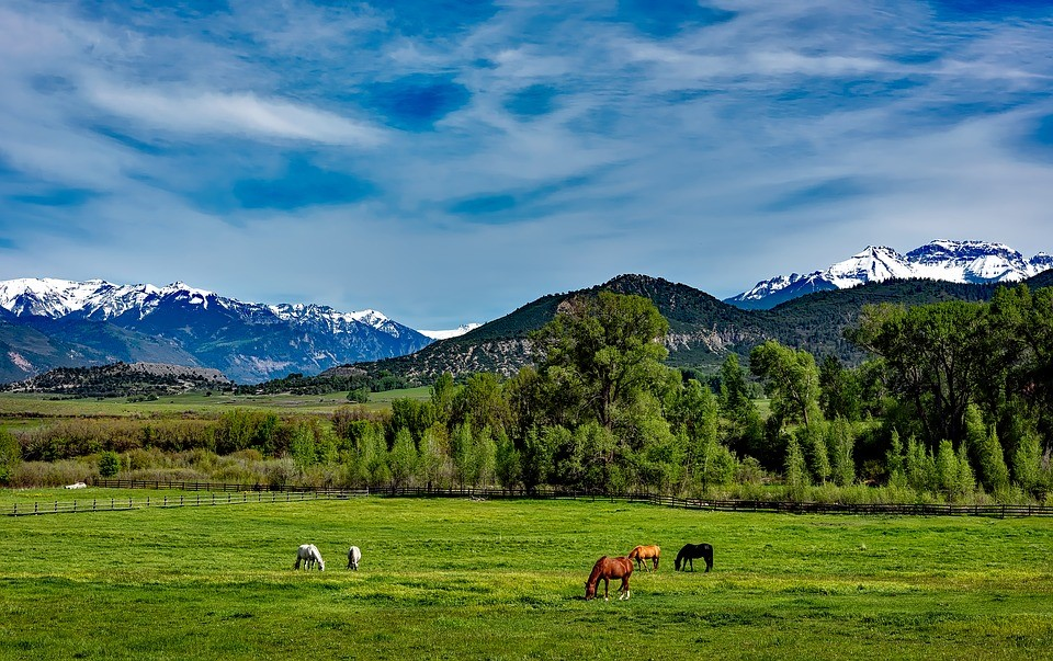 Valuable Features of Ranches