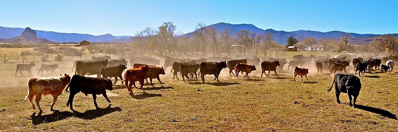 Indian Creek Ranch - La Veta, Colorado Cattle Ranch