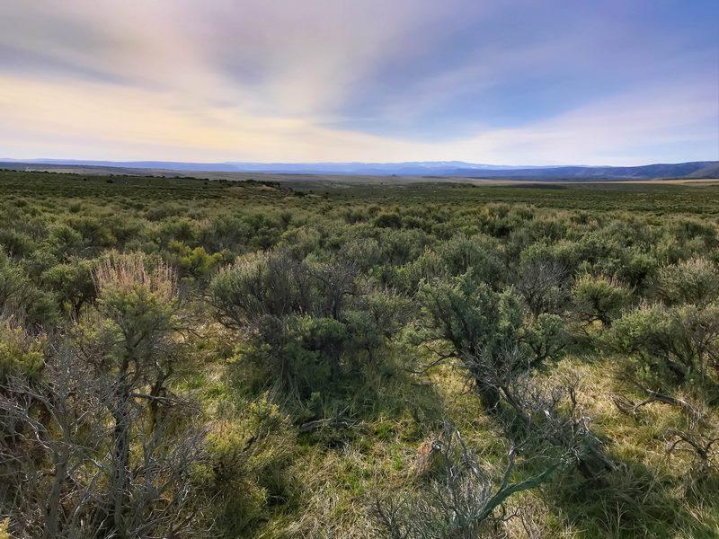 Juniper Mountain Ranch Distant Mountain View