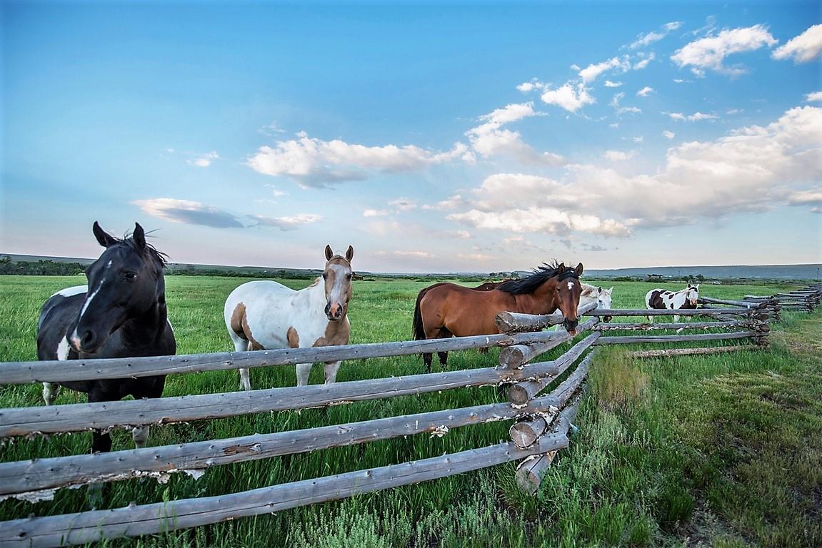 Indian Creek Ranch Horses