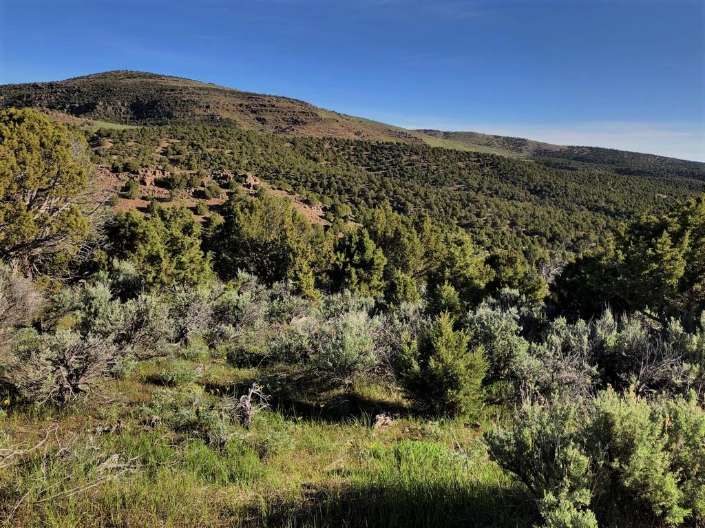 Juniper Mountain Ranch Property