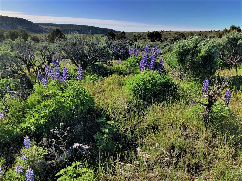 Juniper Mountain Ranch Bottomlands