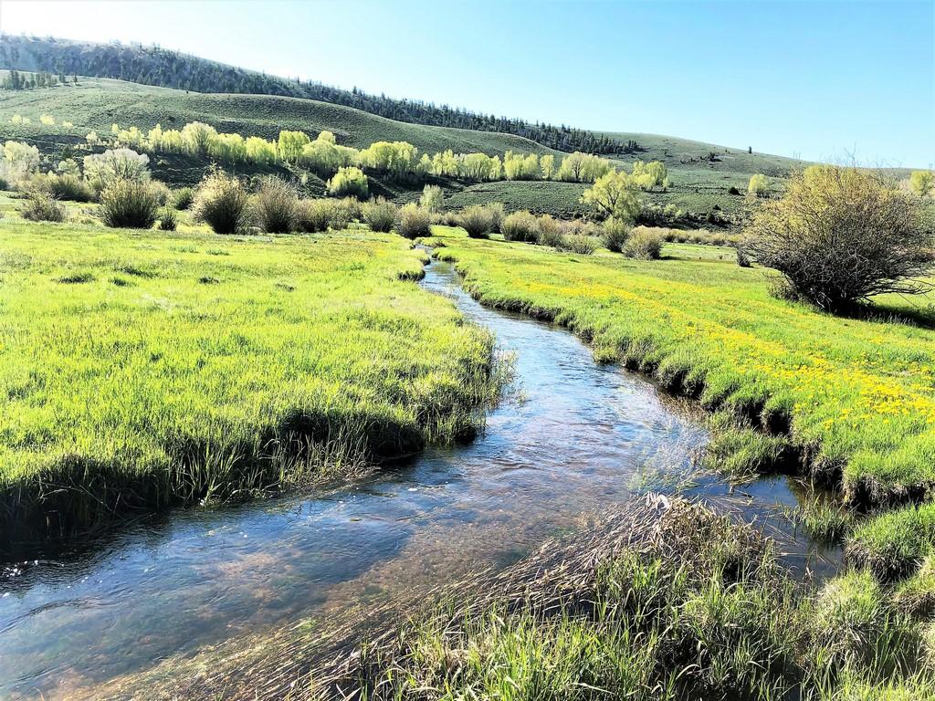 Circle J Ranch Live Water