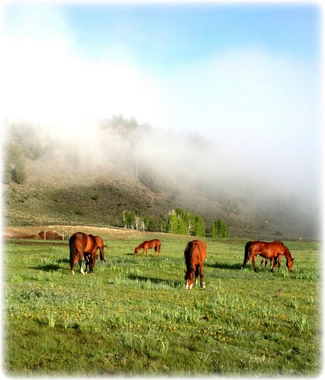 Horse Ranch For Sale in Powderhorn, Colorado - Powderhorn Creek Ranch