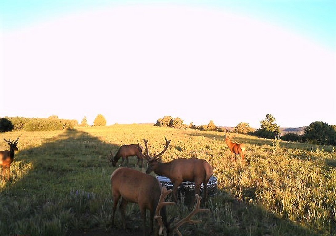 Hunting Ranch - La Plata Mountain Ranch