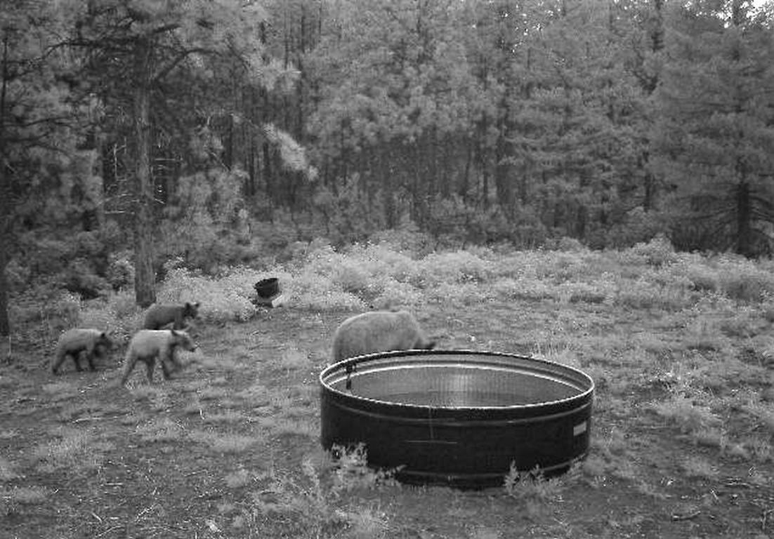 Pitman Cherry Creek Bears