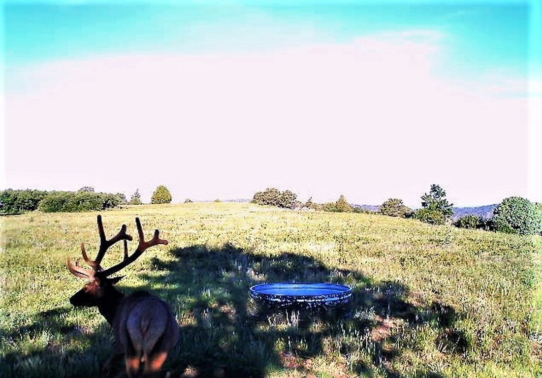Six point Deer at Daylight - La Plata Mountain Ranch