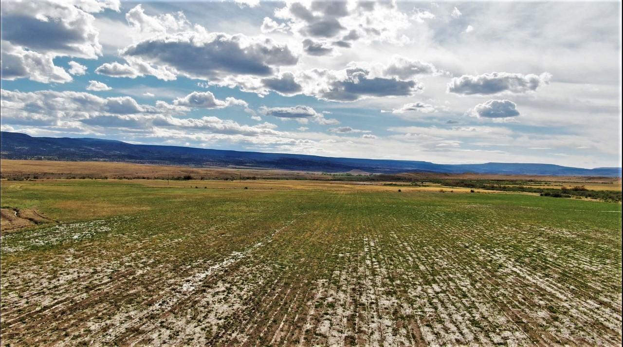 Suckla Ranch Farmland
