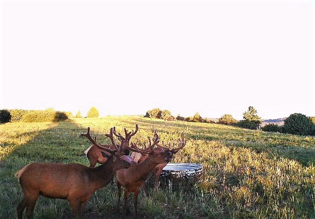 Hunting Ranch - Mancos, CO