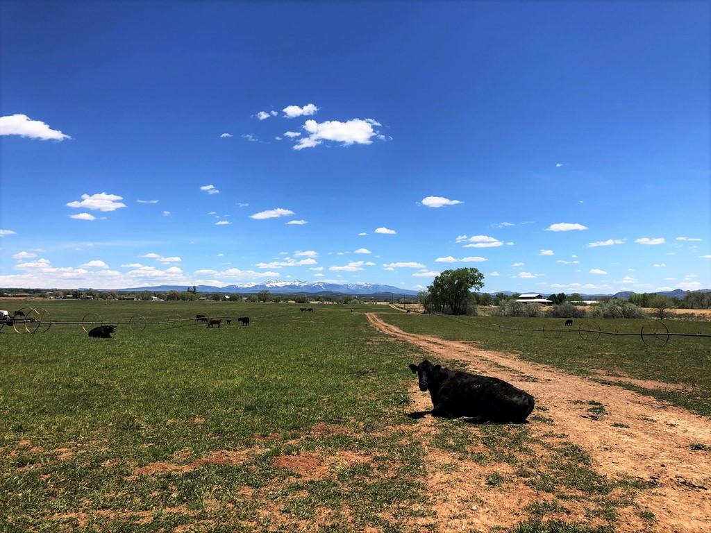 Cattle Ranch - Quarter Circle E Ranch