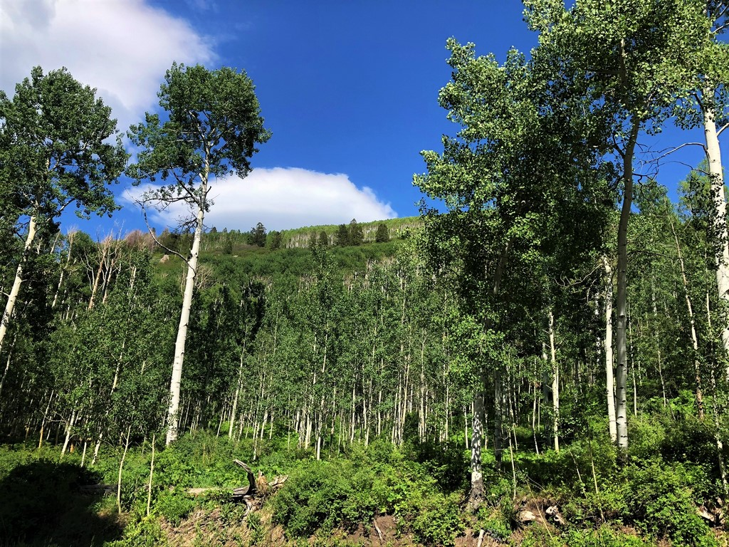 Elk Hunting Land For Sale in Colorado - Morrow Point Ranch