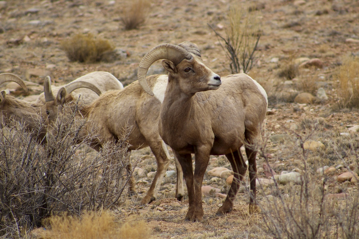 Suckla Ranch - Wild Game