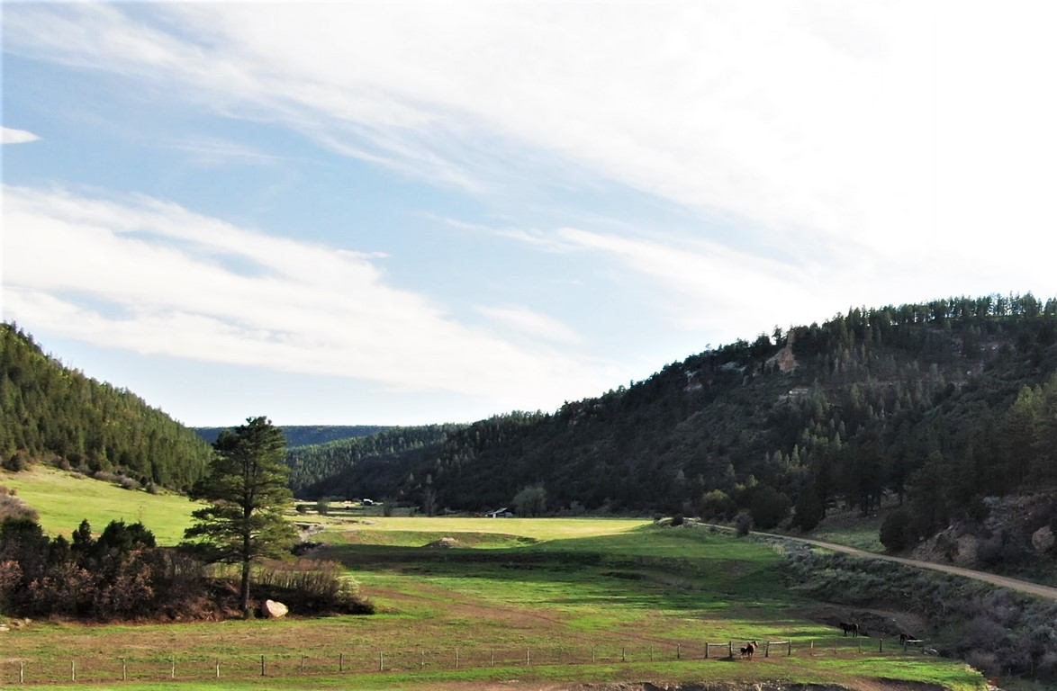 La Plata Mountain Ranch - Agriculture Ranch