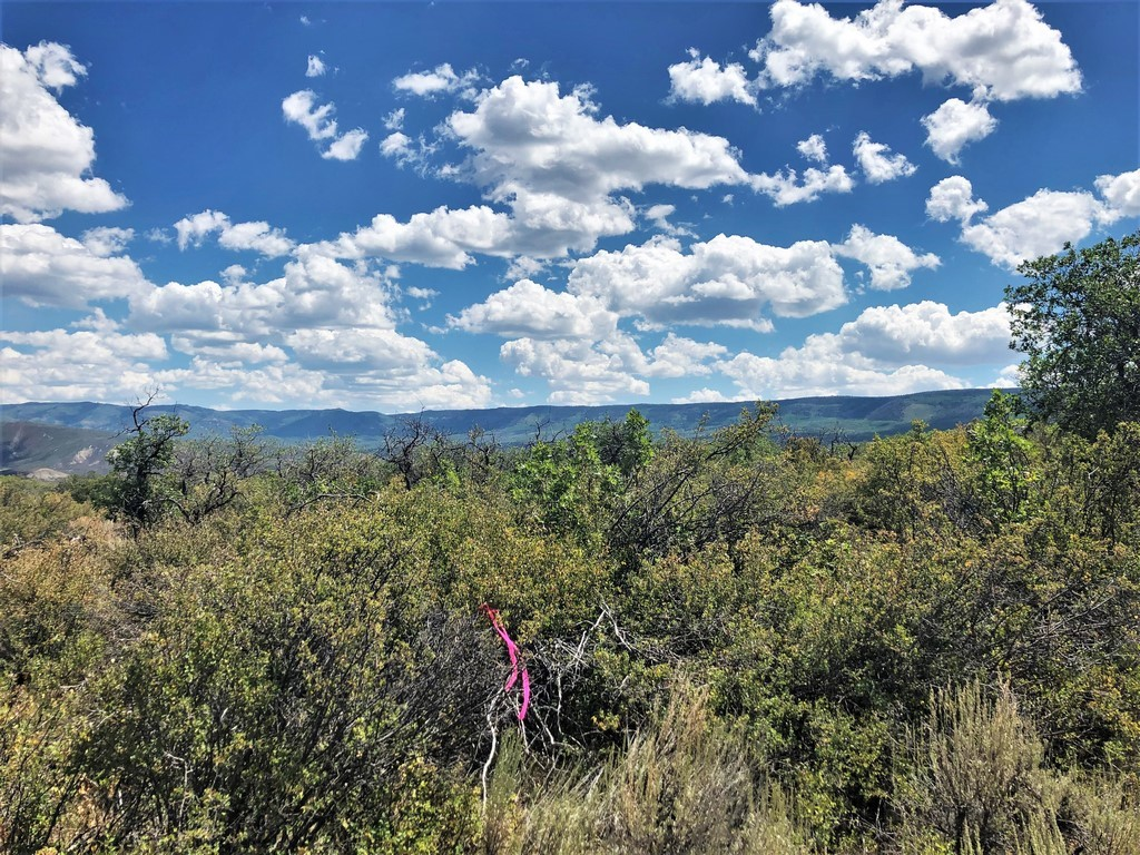 Crawford, CO Ranch For Sale - Ridge Ranch