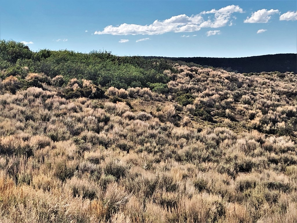 Land For Sale in Crawford, CO - Ridge Ranch