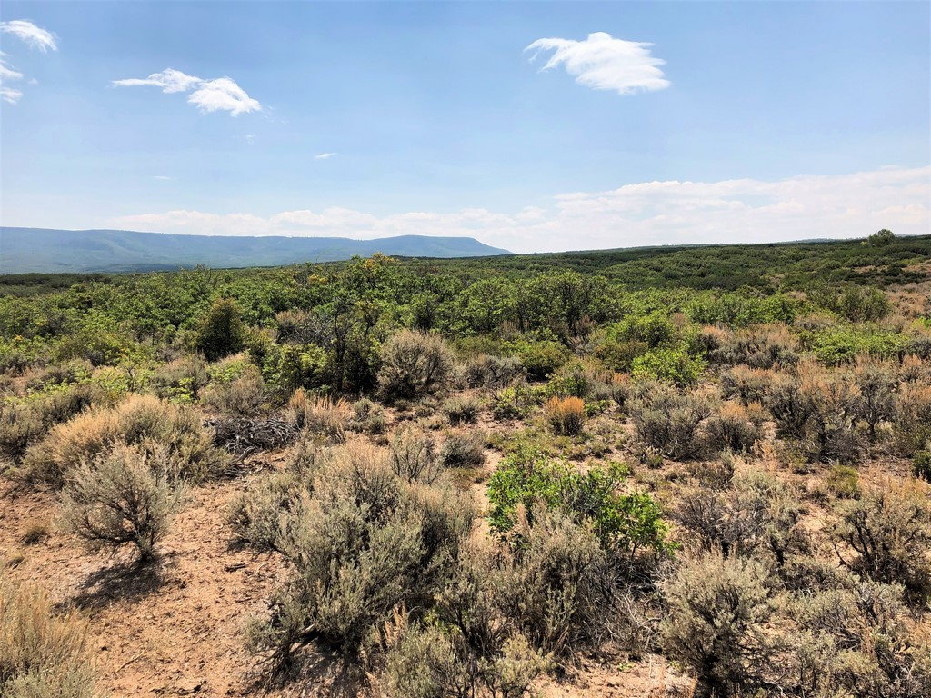 Ranch Land For Sale in Crawford, CO - Ridge Ranch