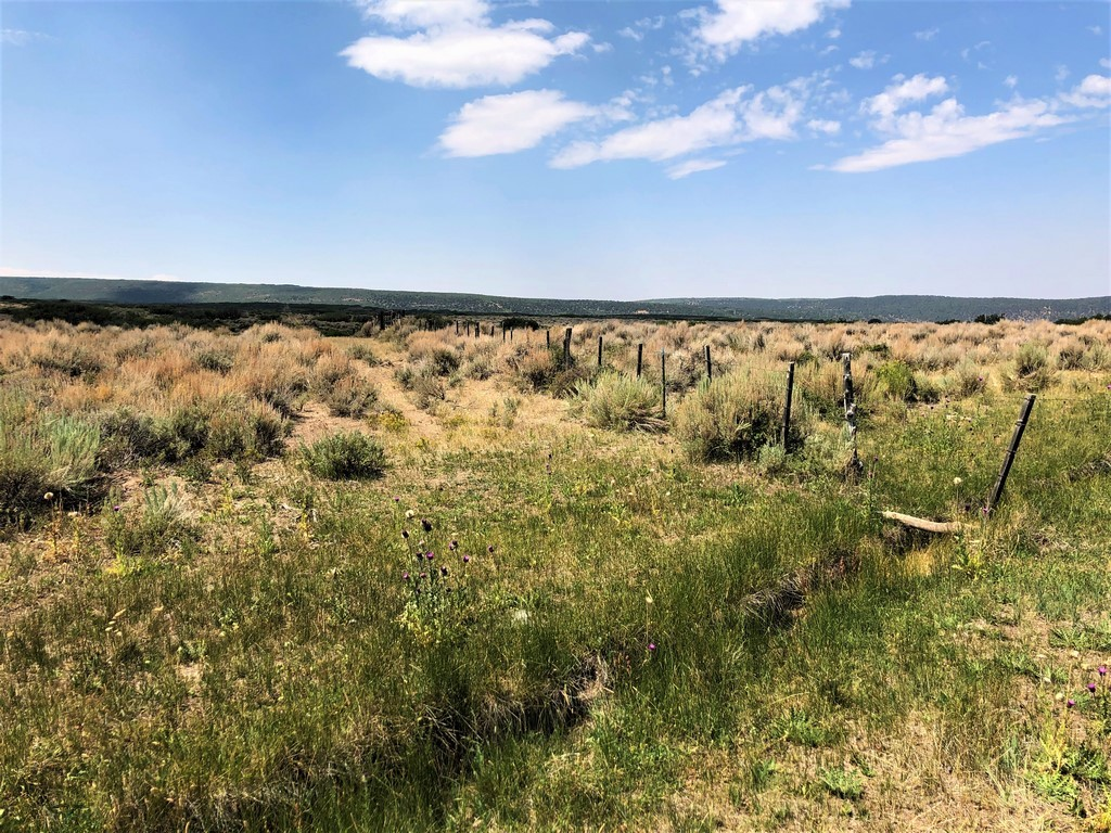 Ridge Ranch - Crawford, Colorado Farm Land
