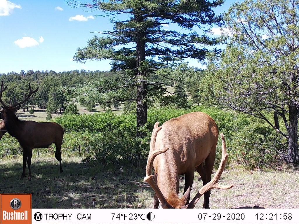 Canon City, Colorado Hunting Land with Mule Deer Bucks