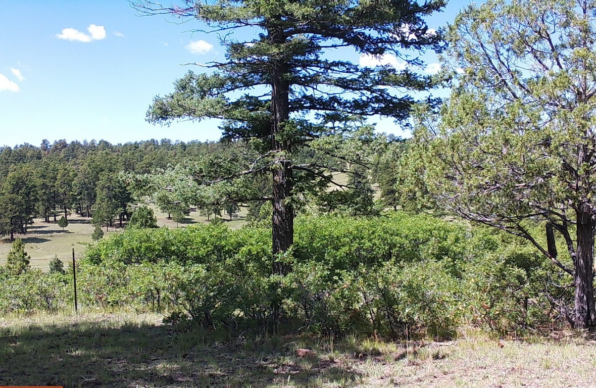 Land For Sale in Canon City, CO
