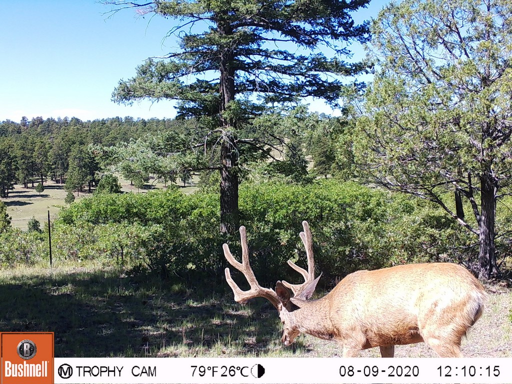 Hunting Land For Sale in Canon City, CO