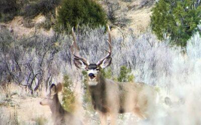 Mesa Verde Ranch
