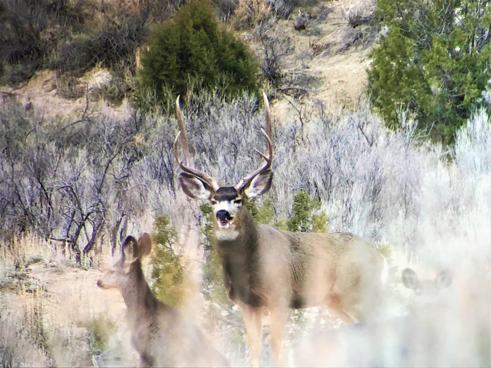 Southwest Colorado Deer Hunting Property