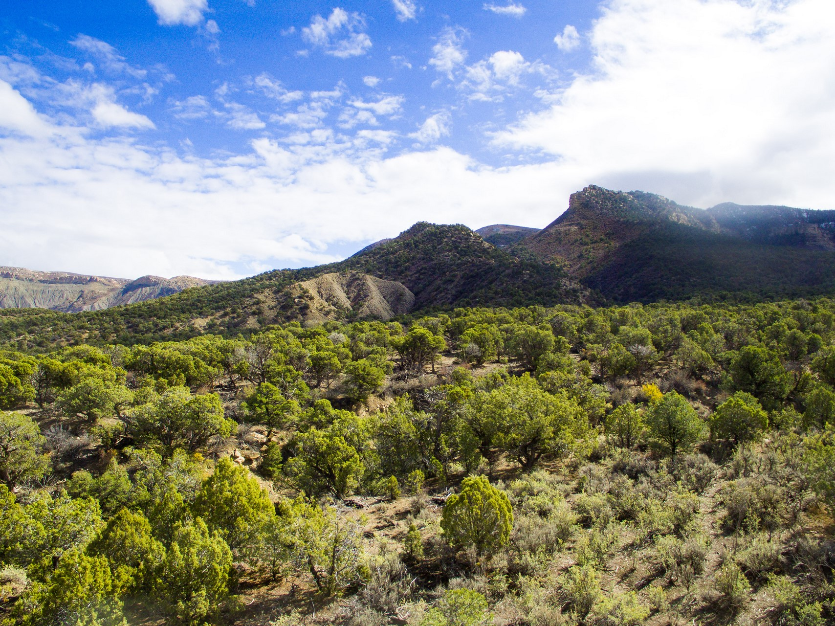 Southwest Colorado Ranch - Mesa Verde Ranch
