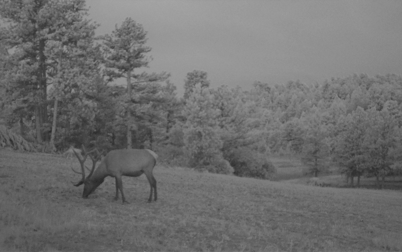 Deer Hunting Land in Colorado - Muy Grande Ranch