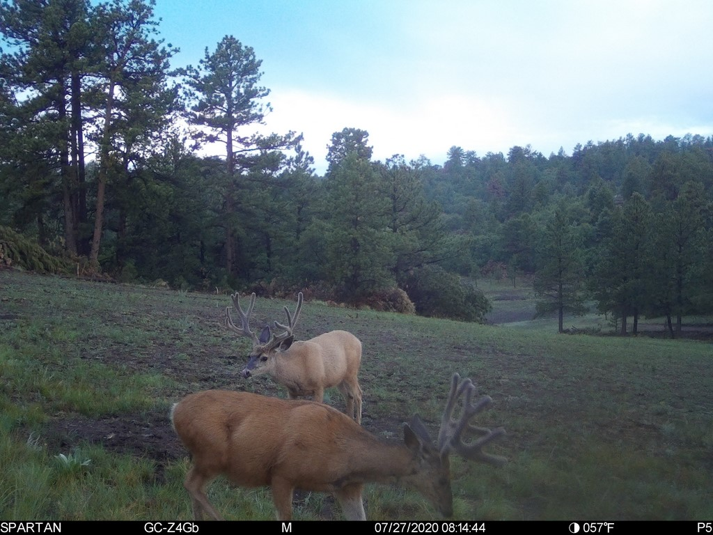 Deer Hunting Land in Canon City, CO - Muy Grande Ranch