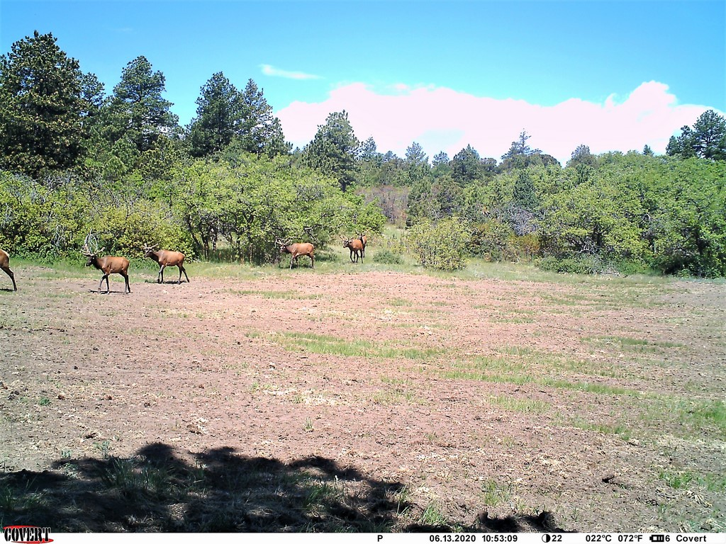Deer Hunting Property in Canon City, CO - Muy Grande Ranch