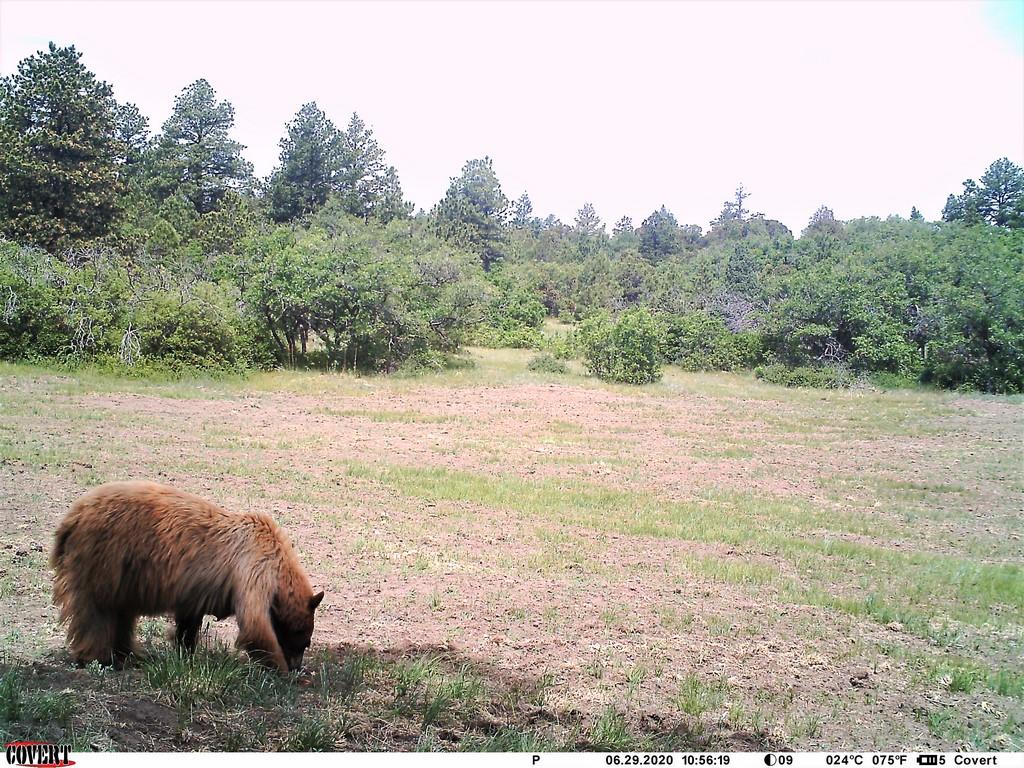 Muy Grande Ranch Wildlife - Canon City, Colorado