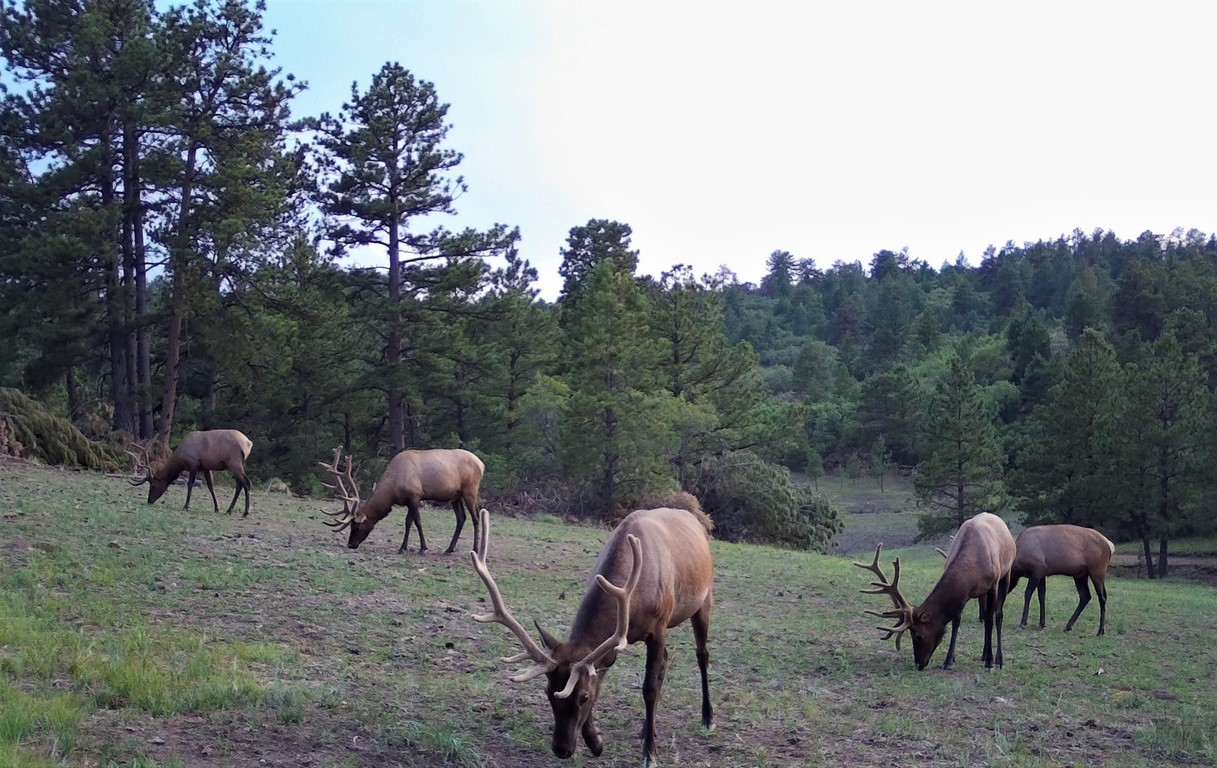 Muy Grande Ranch Deer