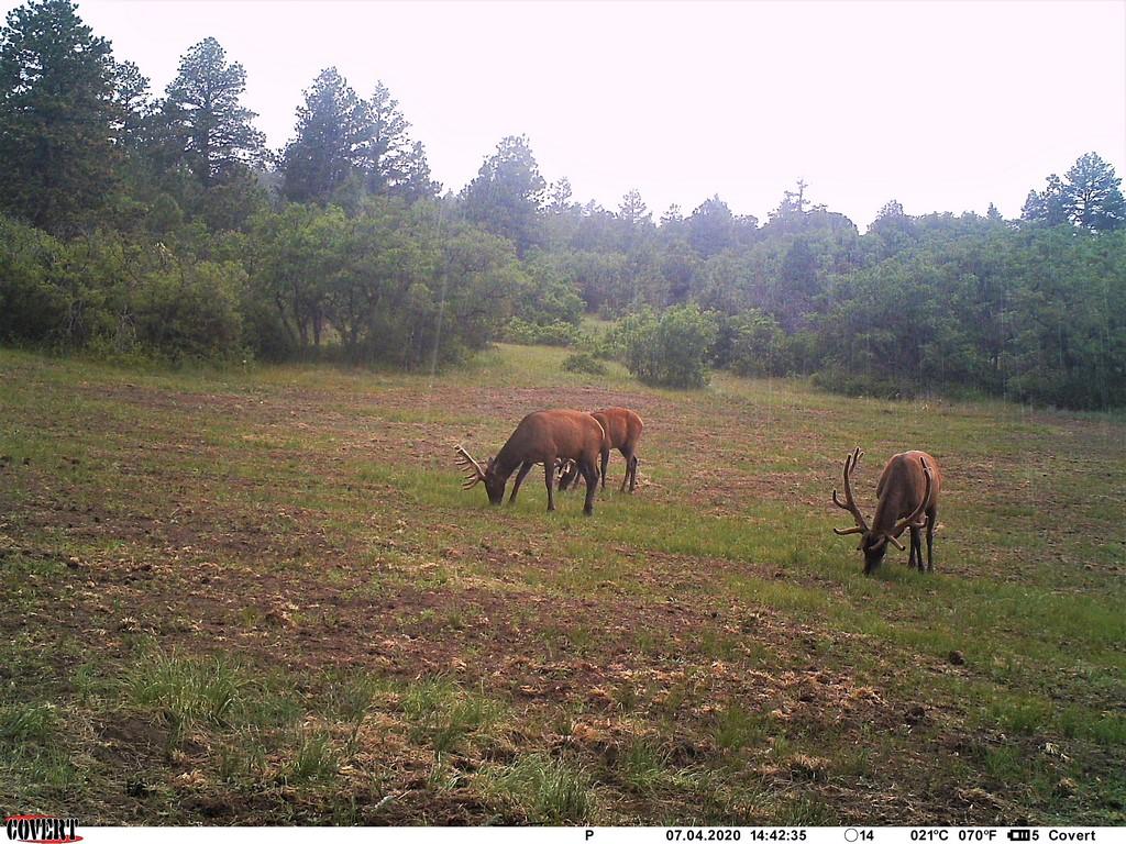 Mule Deer on Muy Grande Ranch