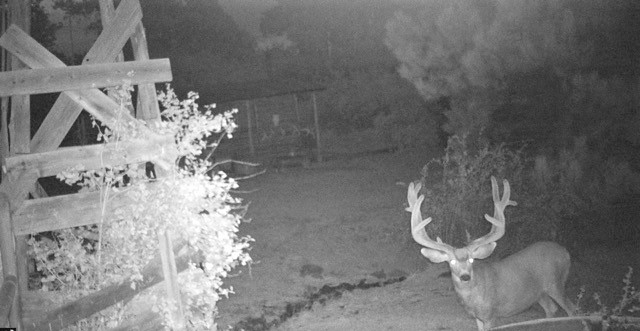 Deer Hunting Property in Canon City, CO