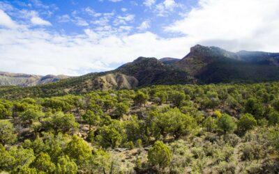 Mesa Verde 320