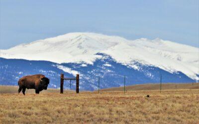 Little Yellowstone Ranch