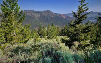 Piney Ridge Ranch